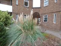 One bedrom flat for rent, Kimber Road, Wandsworth, SW18 4PA